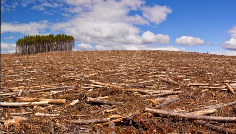 Déforestation 3