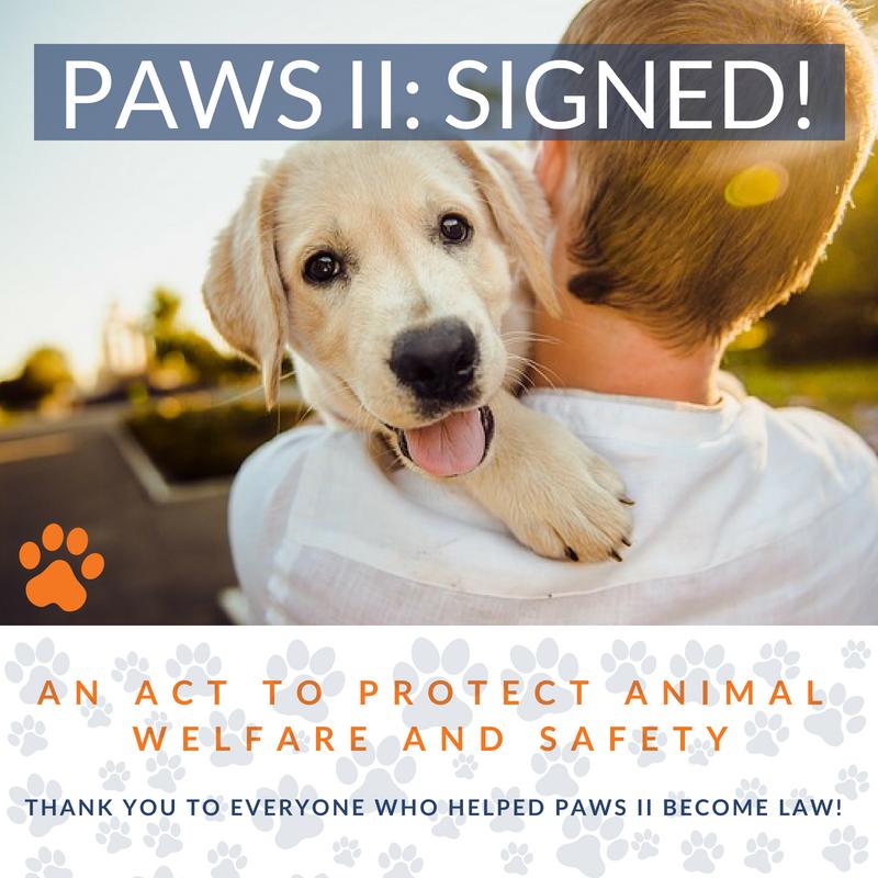 Boston loi protection des animaux