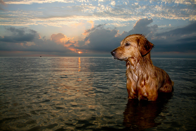 Orvis chiens 26 08 17